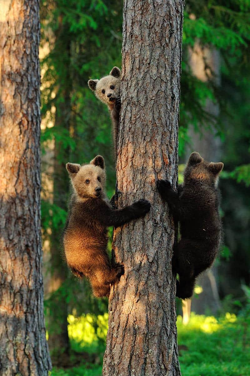 urso-filhote-18