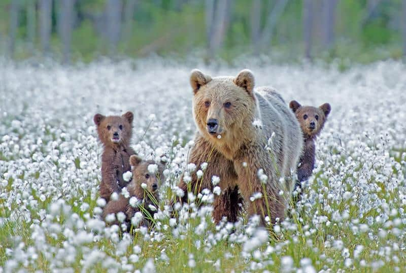 urso-filhote-19