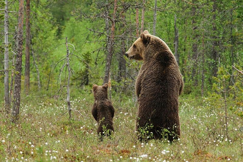 urso-filhote-2