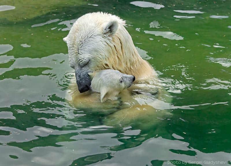 urso-filhote-20