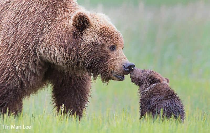 urso-filhote-3