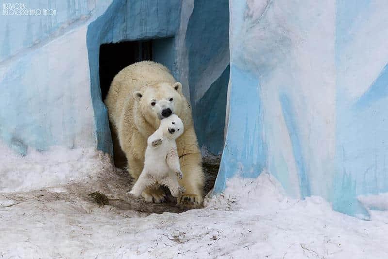 urso-filhote-4