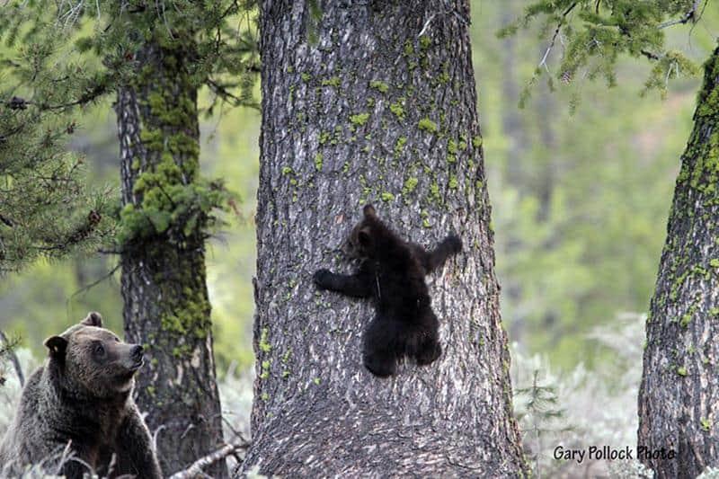 urso-filhote-5