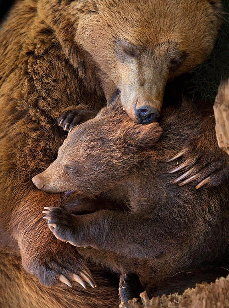 urso-filhote-6