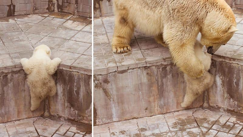 urso-filhote-7