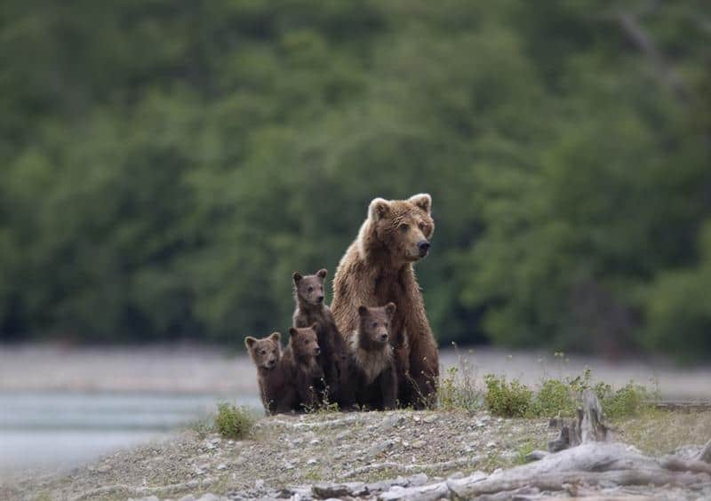 urso-filhote-8