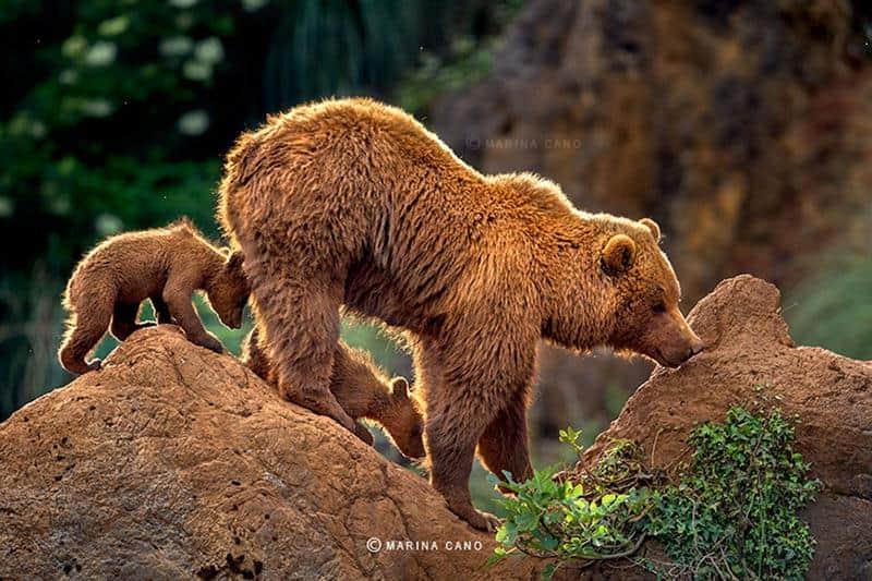 urso-filhote-9