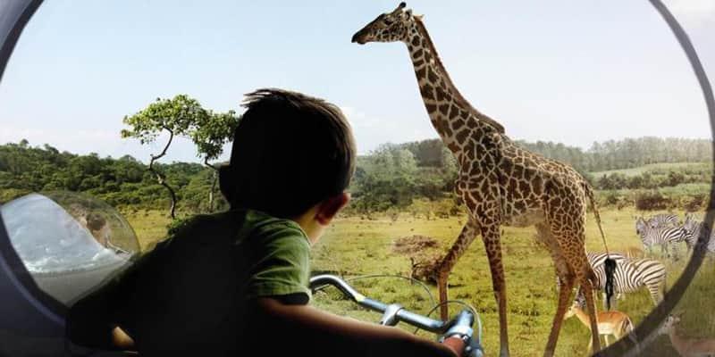 No Zoológico do futuro, não há gaiolas e os animais circulam livremente