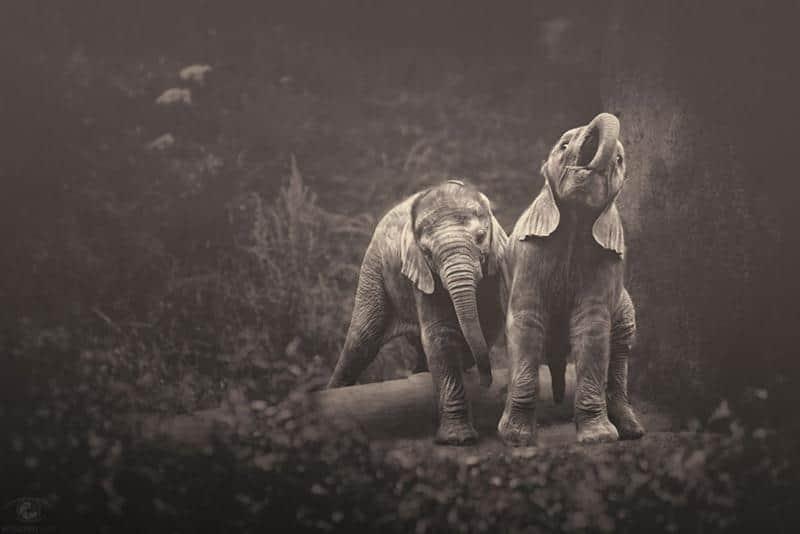 animais-fotos-10