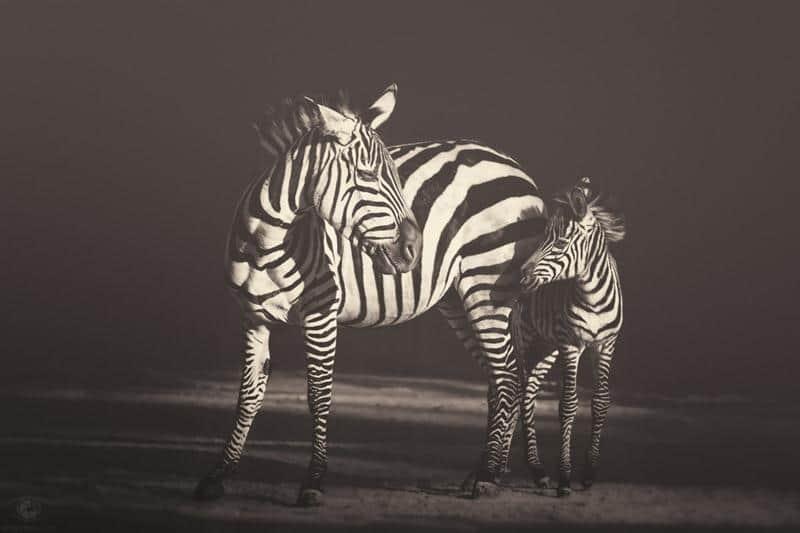 animais-fotos-12