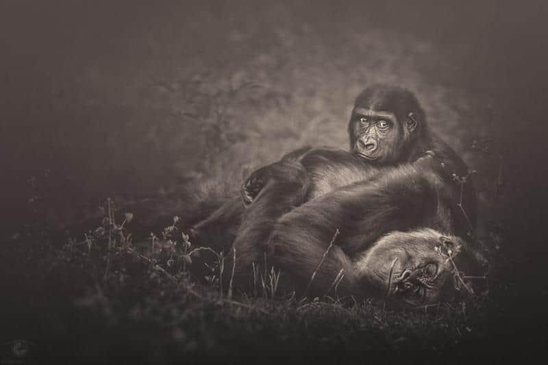 animais-fotos-13