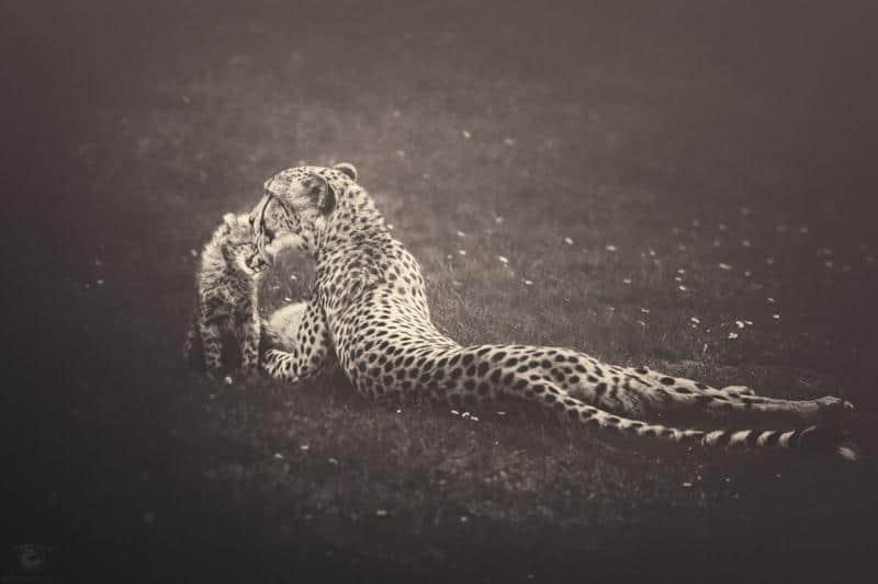 animais-fotos-14