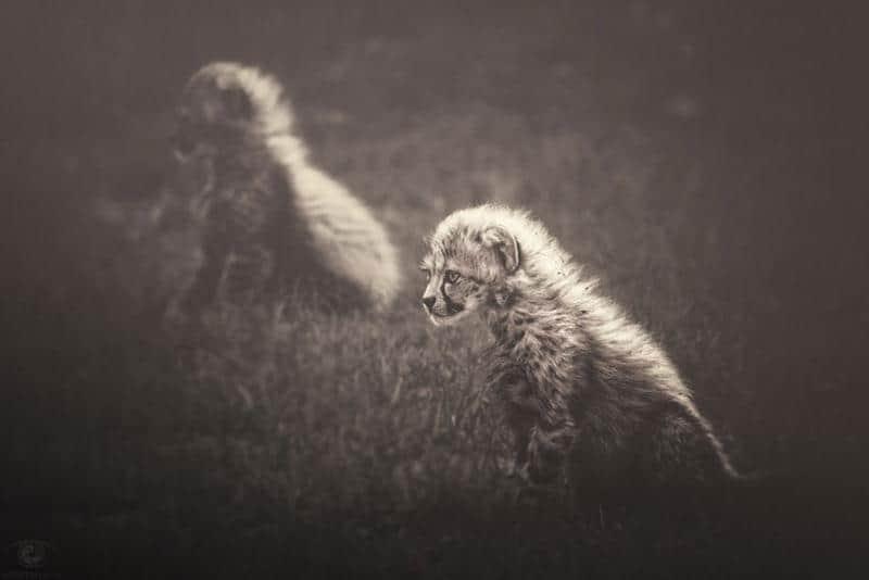animais-fotos-3