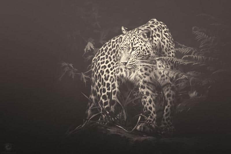 animais-fotos-6