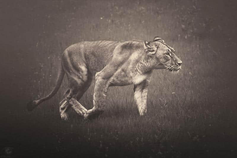 animais-fotos-9