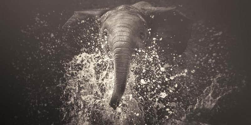 Fotógrafa capta as expressões quase humanas de animais em extinção 1