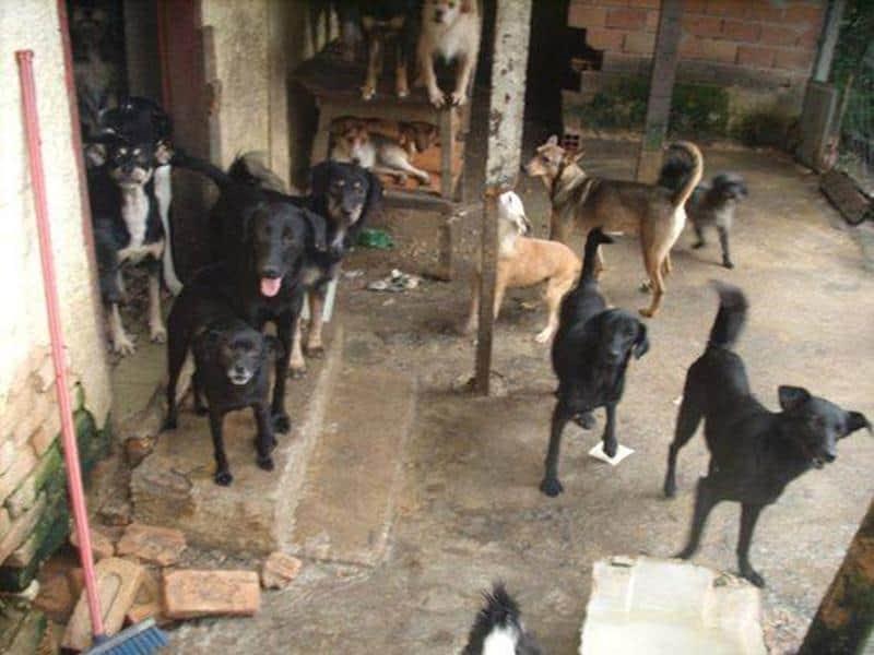 Casal dedica-se há vinte anos a cuidar de animais 2