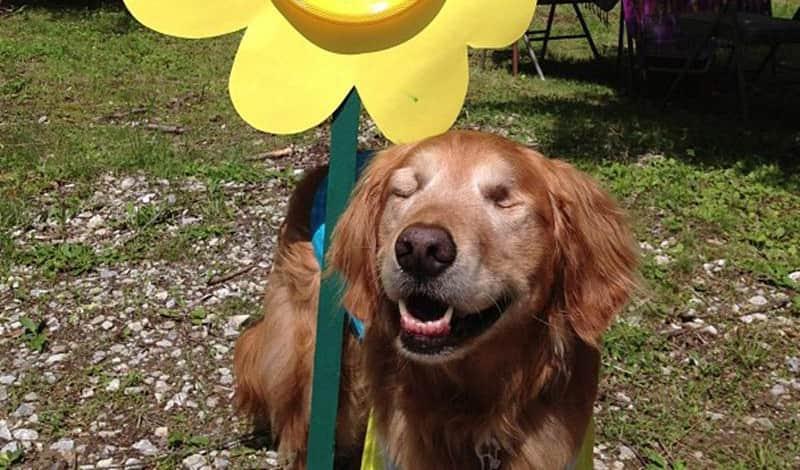 Dutchess o cão de terapia cego que ajuda crianças e adultos autistas 1
