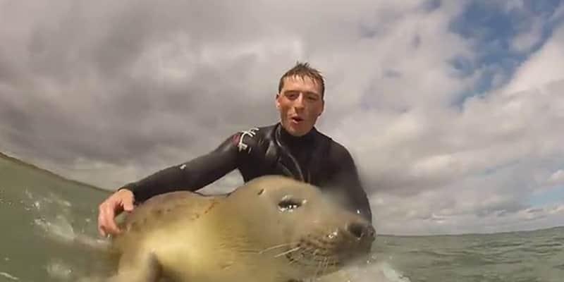 Foca simpática brinca com surfistas na Inglaterra 1