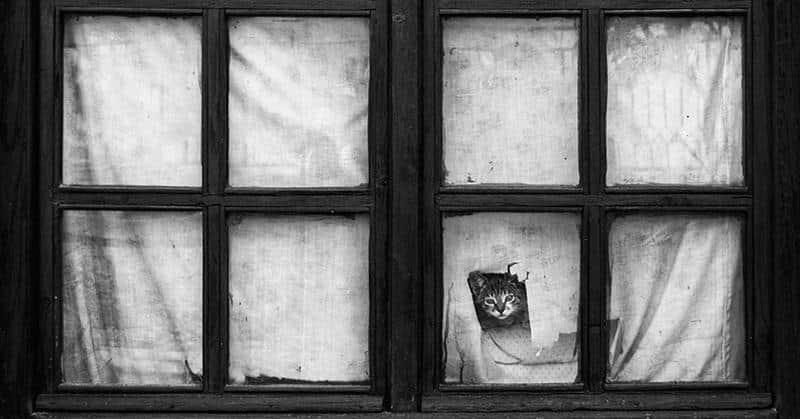 gato-janela-1