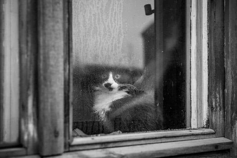 gato-janela-10