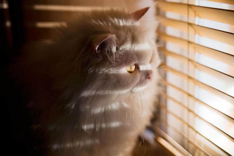 gato-janela-11