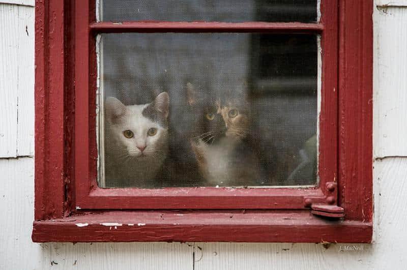 gato-janela-12