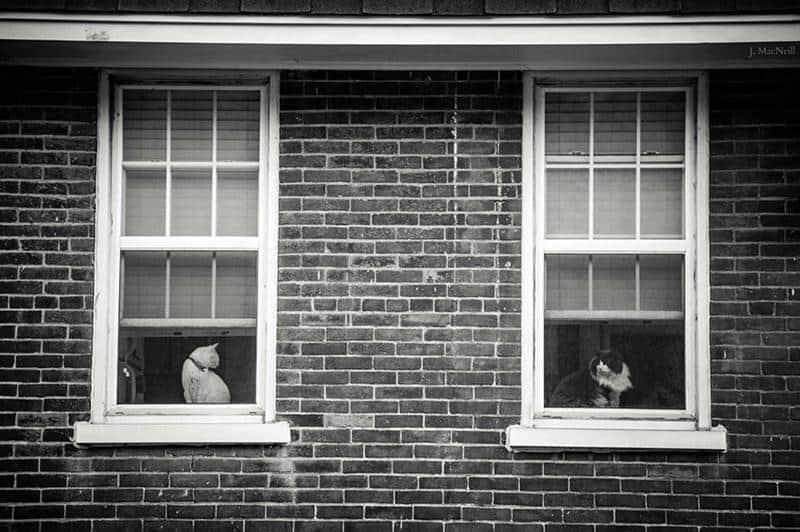 gato-janela-13
