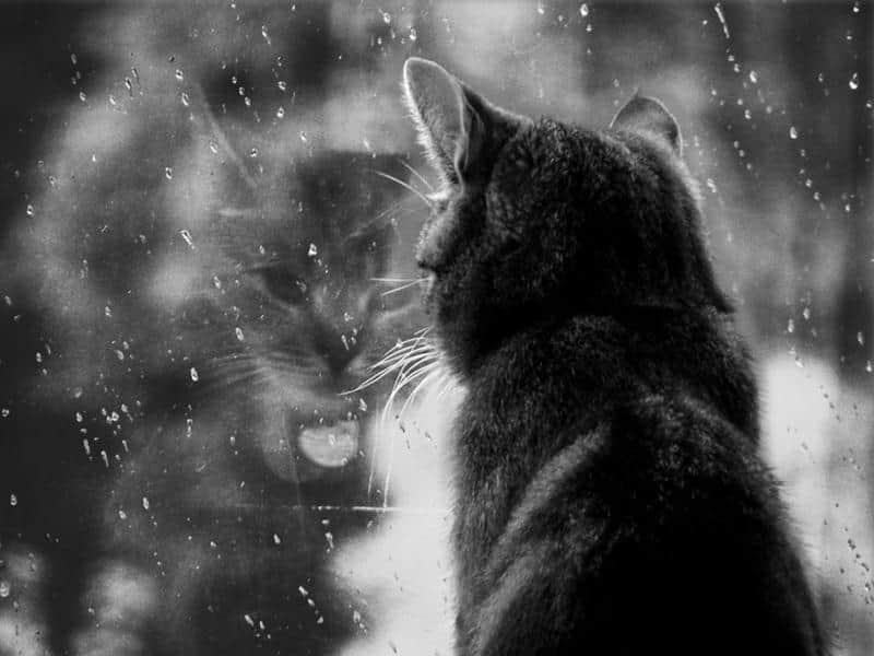 gato-janela-14