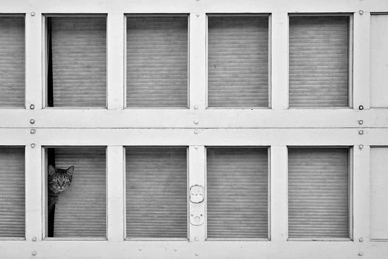 gato-janela-15