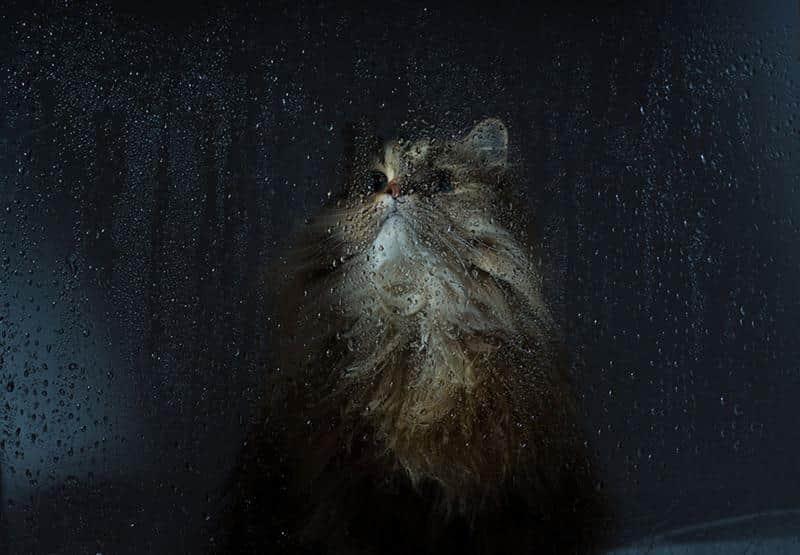 gato-janela-16