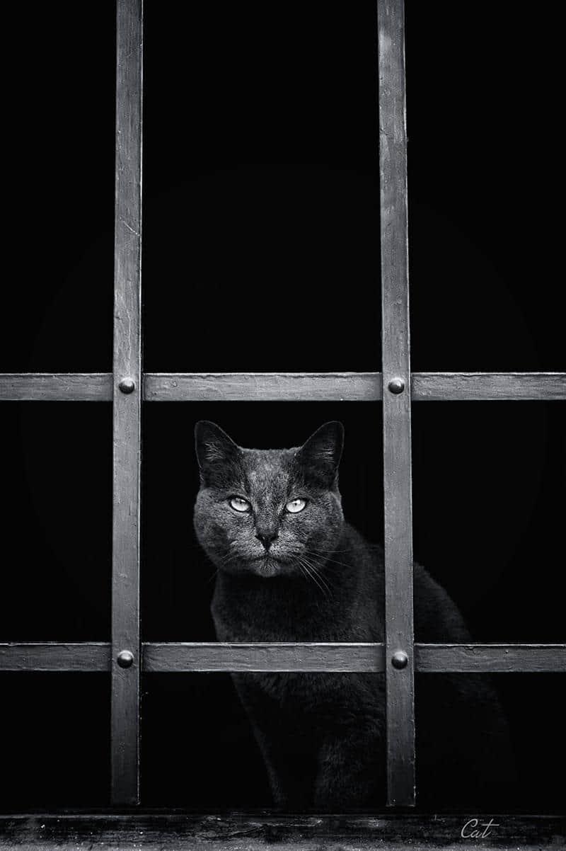 gato-janela-17