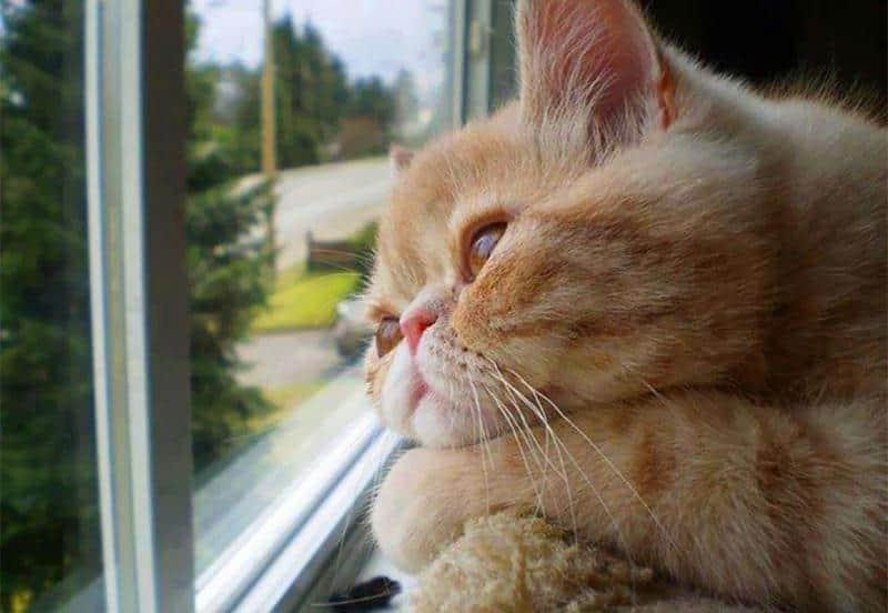 gato-janela-18