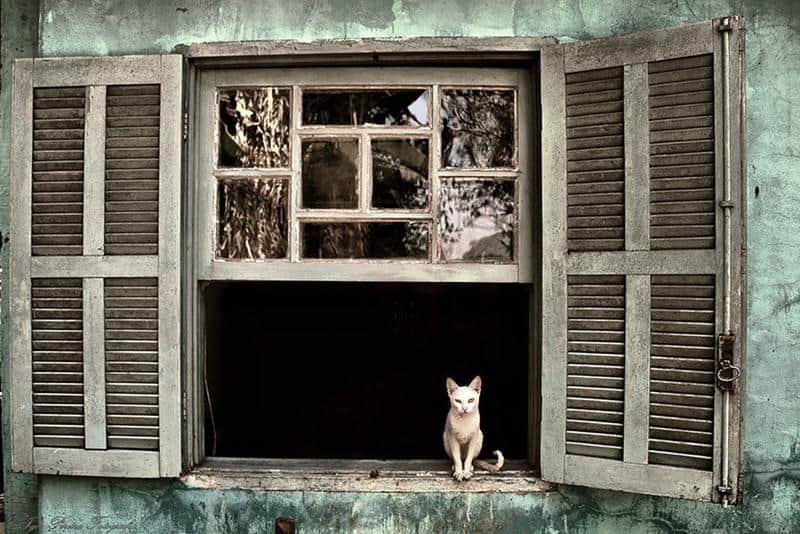 gato-janela-19