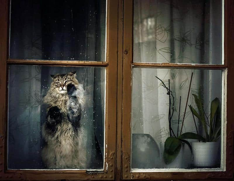 31 gatos fofos olhando o horizonte através da janela de casa 1