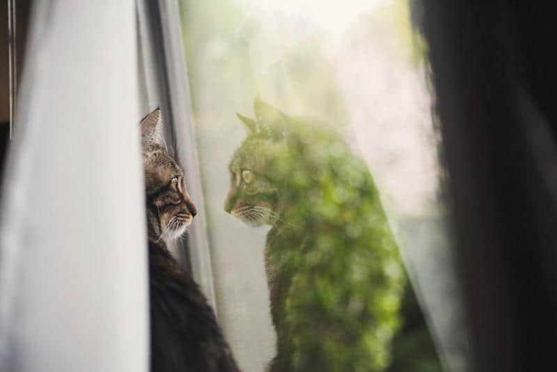 gato-janela-20