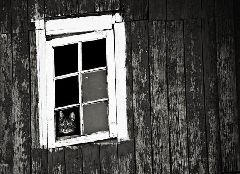 gato-janela-21