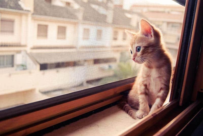gato-janela-22