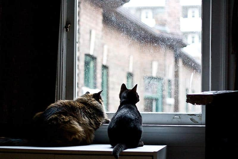 gato-janela-23