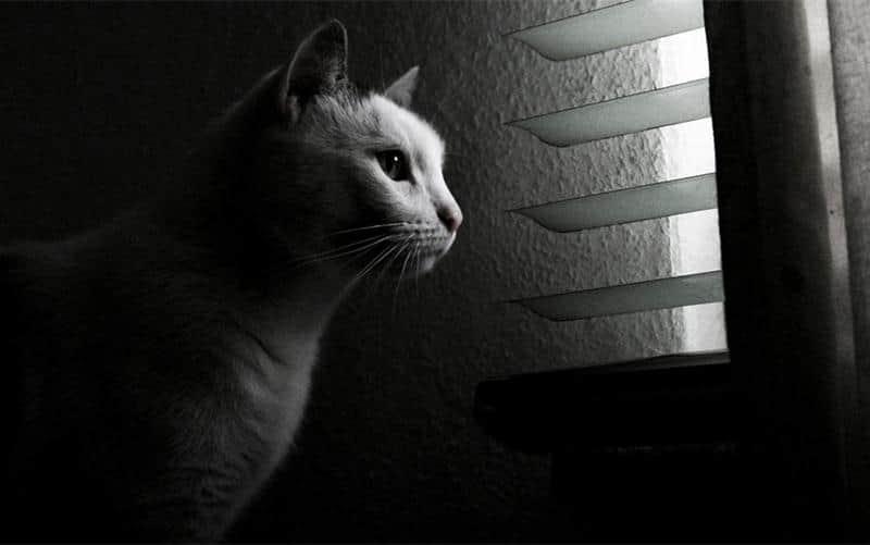 gato-janela-24