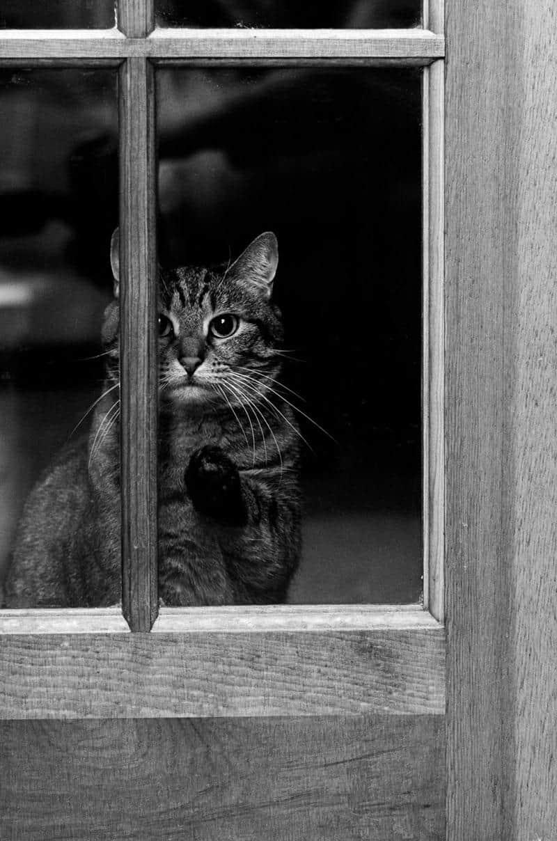gato-janela-25