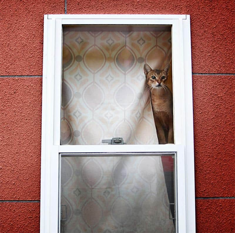 gato-janela-26
