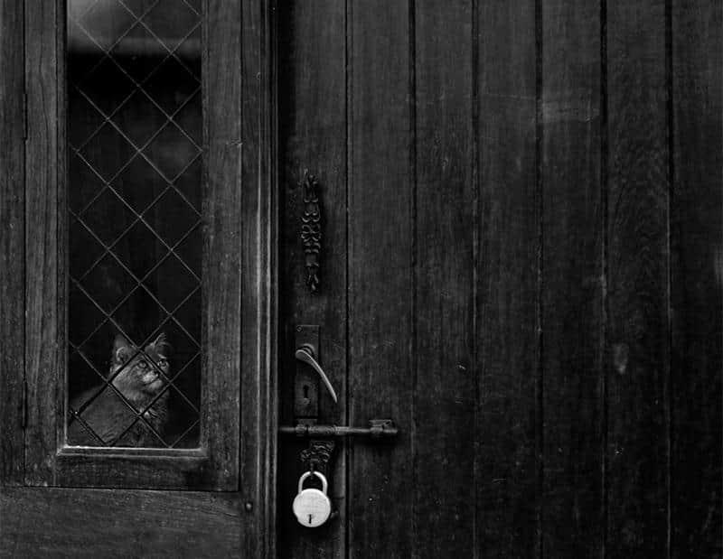 gato-janela-27