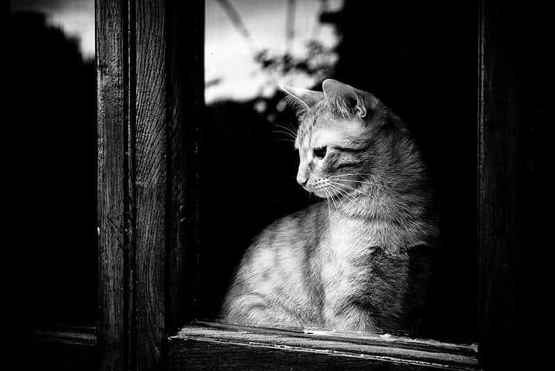 gato-janela-28