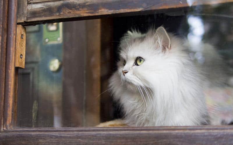 gato-janela-29