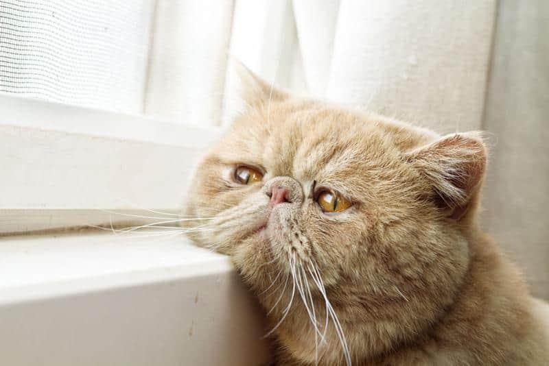 gato-janela-3