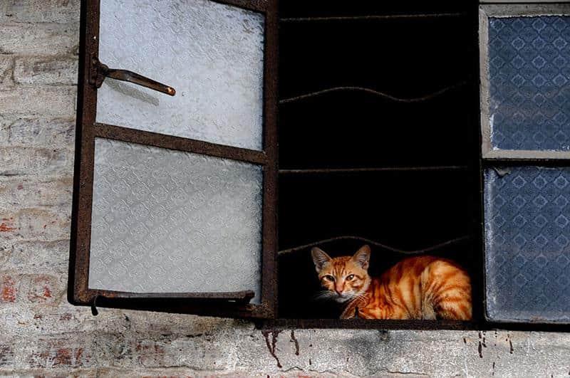 gato-janela-30