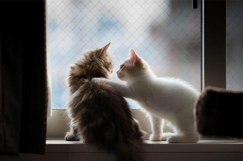 gato-janela-31