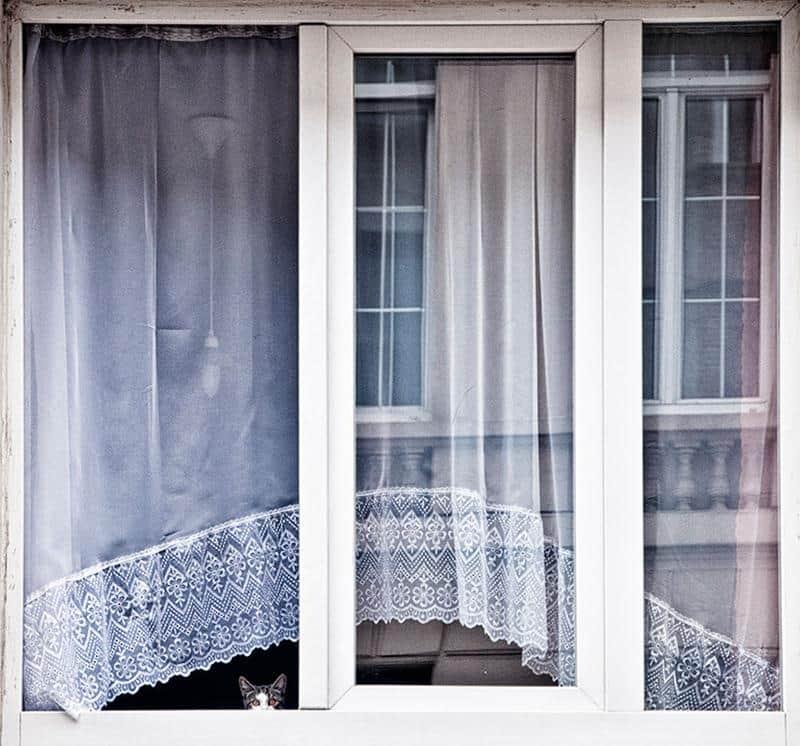 gato-janela-4