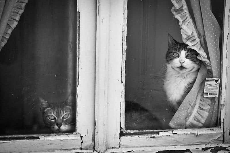 gato-janela-5
